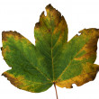 Autumn leaf — Stock Photo #4917210