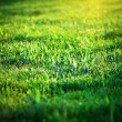 Sun shines green summer grass. close up. — Stock Photo #5167352