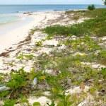������, ������: Dirty Beach Ocean