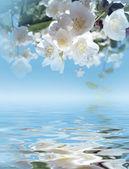 Flores de jasmim — Fotografia Stock