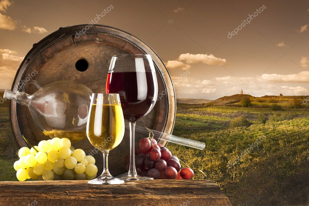 Red and white wine with barrel on vineyard — Stok fotoğraf #4947848