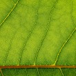 Texture of green leaf — Stockfoto