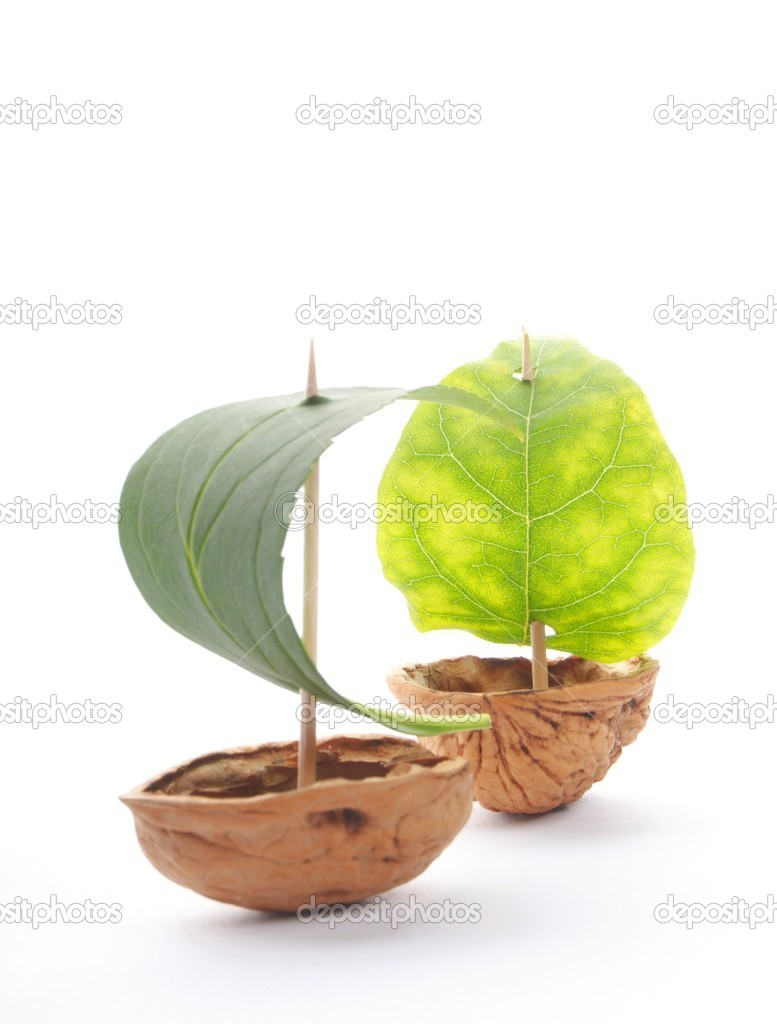 Sailboat made of walnut with a leaf as sail isolated on white background  Stock Photo #4884418