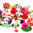 Multicolour  floral background - Stock Photo