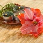 Aromatherapy — Stock Photo #3926864