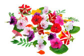 Multicolour floral background — Stock Photo