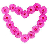 Cornice floreale rosa — Foto Stock