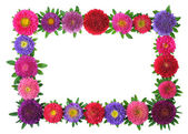 Farbenfrohe aster floral frame — Stockfoto