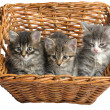 Kittens in basket — Stock Photo