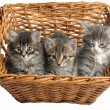 Stock Photo: Kittens in basket