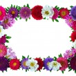 Colorful aster floral frame — Stock Photo #4869169