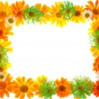 Floral frame — Stock Photo #5132957