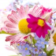 Small bouquet of spring flowers — Stock Photo