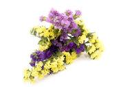 Statice flowers - Limonium Sinuatum — Stock Photo
