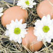 Eggs and oxeye daisy flower lying on hay - Stock Photo