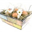 Eggs and oxeye daisy flower in flowerpot - Stock Photo