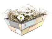 Daisies flower in old flowerpot — Stock Photo