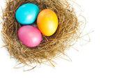 Easter eggs in bird nest — Stock Photo