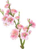 Flowering branch of sakura — Stock Vector