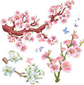 Set of flowering branches — Stock Vector