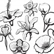 Royalty-Free Stock Vectorafbeeldingen: Set of flower heads