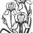 Stok Vektör: Sketch of iris flowers