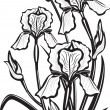 Sketch of iris flowers — Stock vektor