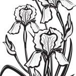 desenho de flores de íris — Vetorial Stock