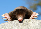 Mole against the sky — Stock Photo