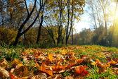 Autumn landscape — Foto Stock