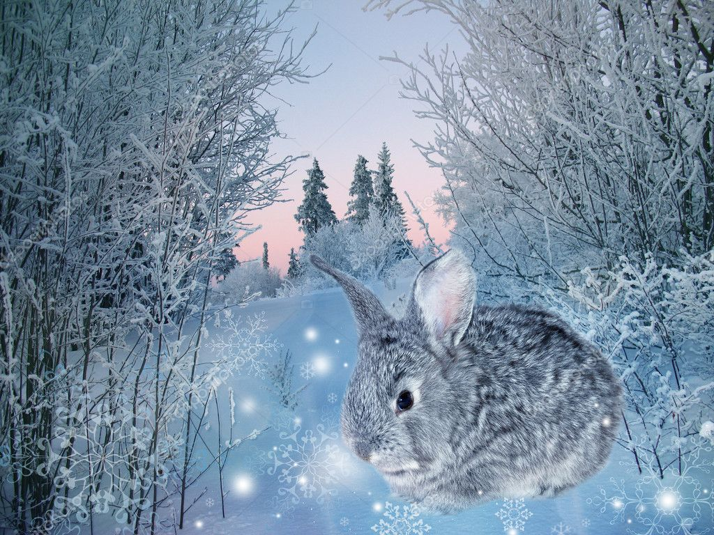 winter rabbit stock photo nataliiamelnyc 4615166. Black Bedroom Furniture Sets. Home Design Ideas