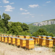 Beehives — Stock Photo #4290701