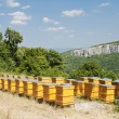 Beehives — Stockfoto #4290701