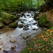 Autumn stream — Foto Stock