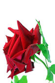 Rosa roja sobre fondo blanco. — Foto de Stock