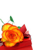 Rose and gift box. — Stock Photo