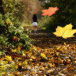 Autumn - Foto Stock