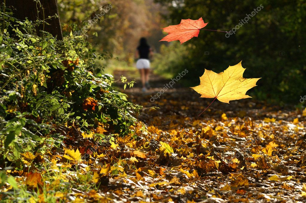 Jogger in the autumn woods — Stock Photo #4463168