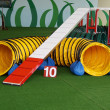 Stock Photo: Agility Dog Tunnel and Dogwalk