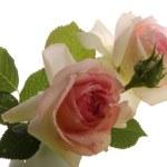 kwiaty — Zdjęcie stockowe