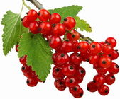 Fruits-Currants — Foto de Stock