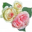 Flowers-Rose - Stock Photo
