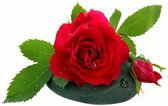 Flowers-Rose — Stock Photo
