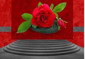 Flower-Rose-Gallery — Stock Photo