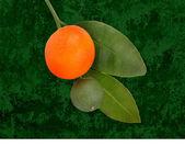 Orangen — Stockfoto