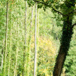 Green forest with a dark tree — Stock Photo