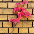 Autumn leafs on a brick wall - 图库照片