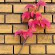 Autumn leafs on a brick wall — Stock fotografie