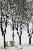 Trees and fence in wintertime — Stock Photo