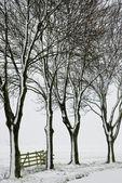 árboles y valla en invierno — Foto de Stock
